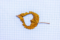 Chute dans la métaphore de photo d'amour Feuille d'érable avec la forme de coeur sur le fond de papier Photographie stock libre de droits