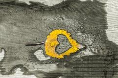 Chute dans la métaphore de photo d'amour Feuille d'érable avec la forme de coeur sur le fond en bois Images stock