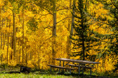 Chute dans Steamboat Springs le Colorado Images stock