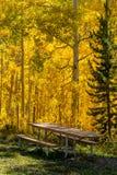 Chute dans Steamboat Springs le Colorado Images libres de droits