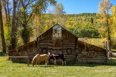Chute dans Steamboat Springs le Colorado Photographie stock libre de droits