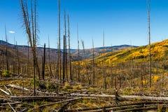 Chute dans Steamboat Springs le Colorado Photos stock