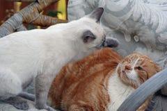 Chute de chat Image libre de droits