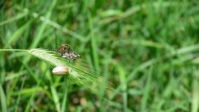 Chute de deux insectes de feuille banque de vidéos