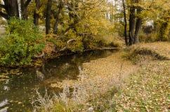 Chute de feuille d'automne Photos libres de droits