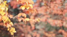 Chute de feuille en parc de ville d'automne Beau fond banque de vidéos
