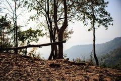 Chute de feuilles avec le coucher du soleil Photo libre de droits