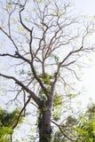 Chute de feuilles d'arbre Photos stock
