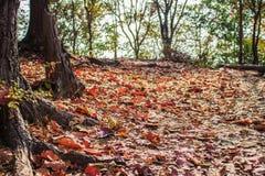 Chute de feuilles en automne Photographie stock