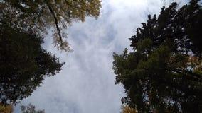 Chute de feuilles de jaune du ciel banque de vidéos