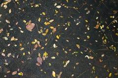Chute de feuilles sur la route C'est un signe du début de l'automne au Japon image stock