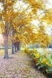Chute de feuilles, texture de fond d'automne Photographie stock
