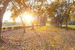 Chute de feuilles, texture de fond d'automne Photographie stock libre de droits