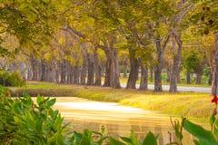 Chute de feuilles, texture de fond d'automne Photos libres de droits