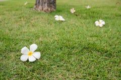 Chute de fleur Images stock