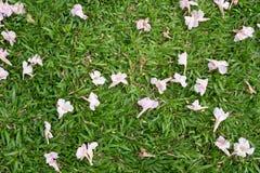 Chute de fleur Photos libres de droits