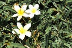 Chute de fleurs Photo libre de droits