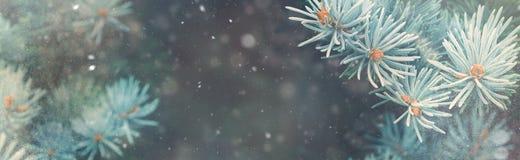 Chute de neige dans la bannière de magie de nature de Noël de forêt d'hiver photographie stock