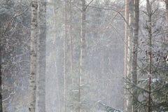 Chute de neige dans la forêt d'hiver Photos stock