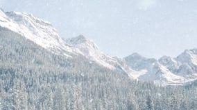 Chute de neige dans les montagnes banque de vidéos
