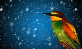 Chute de neige et oiseau coloré photographie stock libre de droits
