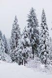 Chute de neige importante Photographie stock