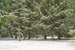 Chute de neige importante dans la forêt photos libres de droits