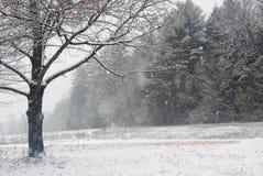 Chute de neige paisiblement dans un domaine en Nouvelle Angleterre un jour de fin décembre Image stock