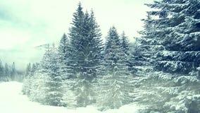 Chute de neige sur des arbres Hiver en montagnes banque de vidéos