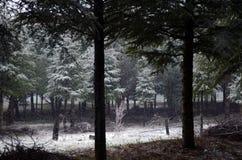 Chute de neige sur la forêt Photographie stock libre de droits