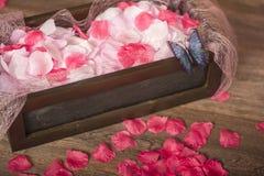 Chute de pétales de rose au plancher Image stock