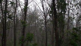 Chute de pluie dans la forêt banque de vidéos