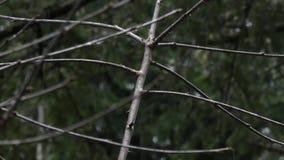 Chute de pluie et de verglas sur les branches nues dans le matin d'hiver clips vidéos