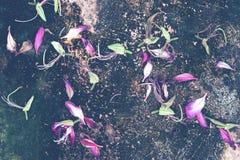 Chute des pétales de fleur sur le plancher Photo stock