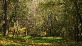 Chute Forest Series - le vent souffle des feuilles des arbres alt banque de vidéos