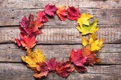 Chute jaune rouge de feuilles de couleur ronde de cadre en bois Photo stock