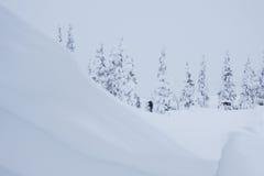 Chute massive de neige Images libres de droits