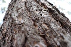 Chute naturelle de pin d'arbre de paysage photographie stock