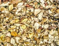 Chute sèche de feuille sur la terre Photos stock