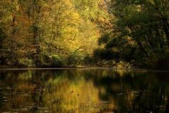 Chute sur la rivière de caneyfork Photo stock