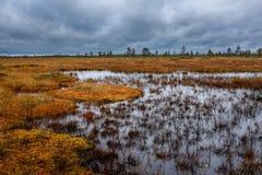 Chute sur le marais Photographie stock