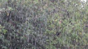 Chutes de forte pluie banque de vidéos