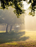 Chutes de lumière du soleil de matin. Images libres de droits