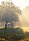 Chutes de lumière du soleil de matin. Photos stock
