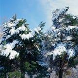 Chutes de neige accrochantes de ressort Photographie stock libre de droits
