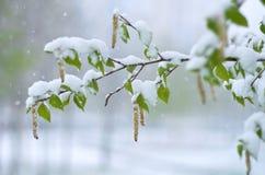 Chutes de neige au printemps Image stock