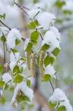 Chutes de neige au printemps Photographie stock libre de droits