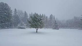 Chutes de neige d'hiver sur le paysage ouvert banque de vidéos
