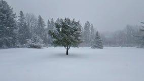 Chutes de neige d'hiver sur le paysage ouvert dans le mouvement lent banque de vidéos