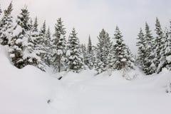 Chutes de neige dans des arbres forestiers d'hiver dans le clair de lune Images stock